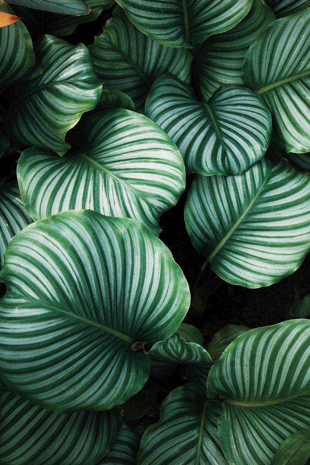 gemusterte pflanzen, trend zimmerpflanze, badezimmer einrichtung, grün, wohntrend, inneneinrichtung, blog, dekoration, natur