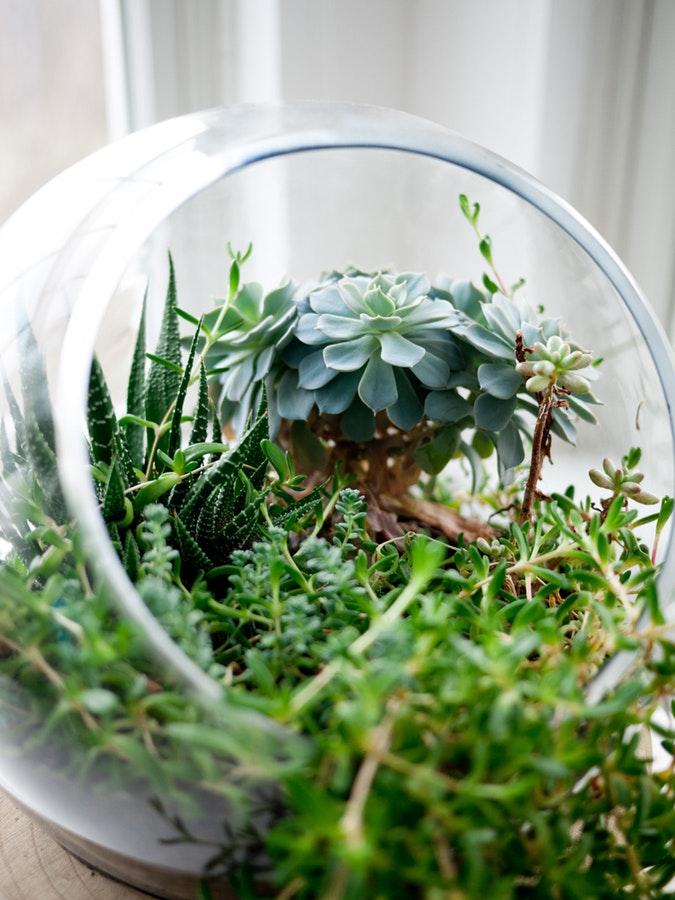 glas sulkkulente, badezimmer dekoration, grünes badezimmer, wohntrend, grün, inneneinrichtung, bad, zimmerpflanzen, sukkultenten, natur, pflanzen