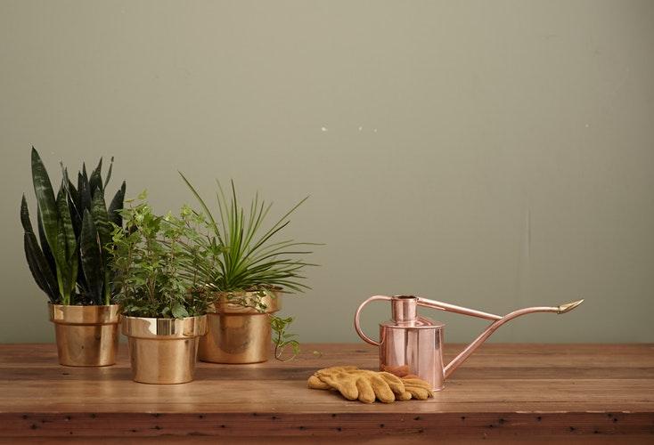 kupfer blumentoepfe, kupfer dekoration, einrichtung, wohnblog, grün, badezimmer, wohntrend, pflanzen, natur, kupfer